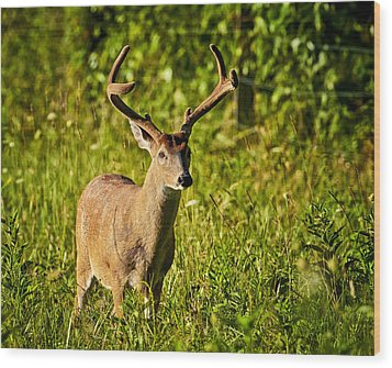 Wood Print featuring the photograph Buck by Tyson and Kathy Smith