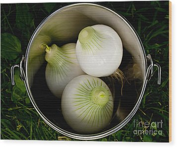 Bucket Of Onions Wood Print by Wilma  Birdwell