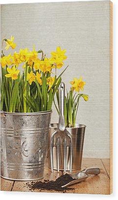 Buckets Of Daffodils Wood Print by Amanda Elwell