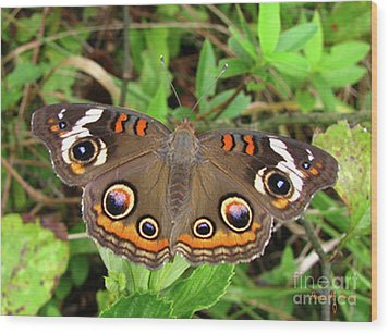Wood Print featuring the photograph Buckeye Butterfly by Donna Brown