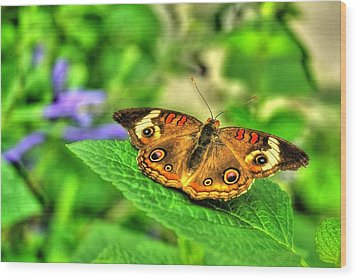 Buckeye Butterfly Wood Print by Ed Roberts