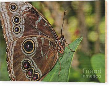 Wood Print featuring the photograph Blue Morpho Butterfly by Olga Hamilton