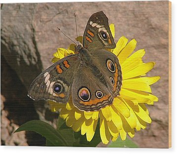 Buckeye Butterfly On Yellow Flower And Rock - 101 Wood Print