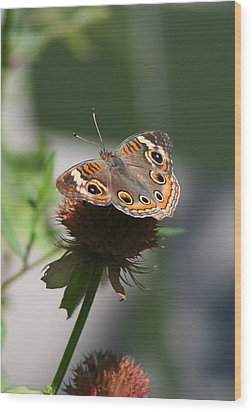 Wood Print featuring the photograph Buckeye by Karen Silvestri