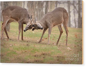 Bucks Fighting 1 Wood Print by Brenda Bostic