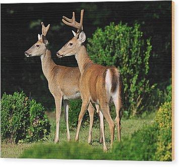 Bucks In Silk Wood Print by Angel Cher