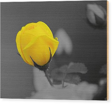 Bud - A Splash Of Yellow Wood Print by John  Greaves