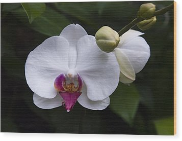 Wood Print featuring the photograph Bud And Bloom II by Penny Lisowski
