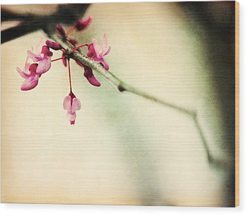 Budding Spring Wood Print by Shannon Beck-Coatney