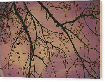 Budding Tree Wood Print by Michele Kaiser