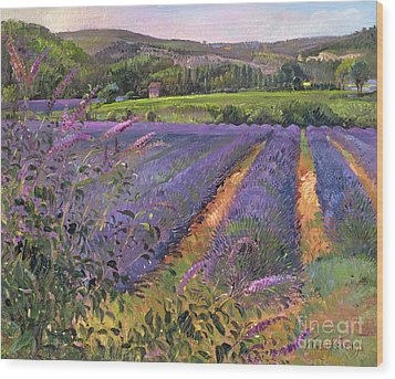 Buddleia And Lavender Field Montclus Wood Print by Timothy Easton