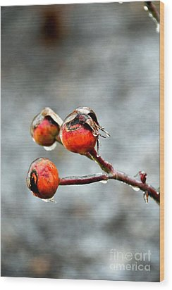Buds On Ice Wood Print