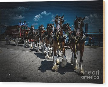 Budweiser Clydesdales Wood Print
