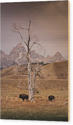 Wood Print featuring the photograph Buffalo And Tetons by Janis Knight