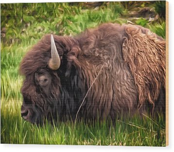 Wood Print featuring the painting Buffalo Cat Nap by Michael Pickett