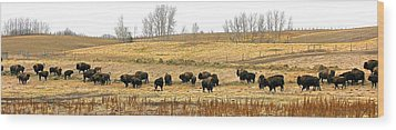 Buffalo Late Fall Wood Print