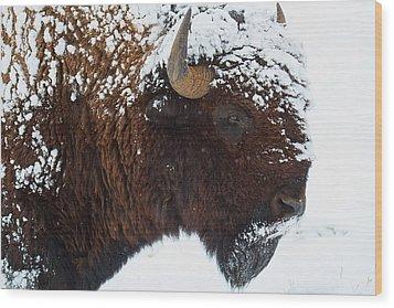 Buffalo Nickel Wood Print by Jim Garrison