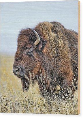 Buffalo Portrait Wood Print by Dale Erickson