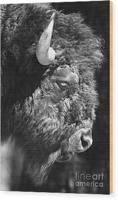 Buffalo Portrait Wood Print by Robert Frederick