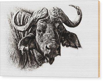 Buffalo Sketch Wood Print by Mike Gaudaur