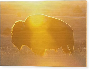 Wood Print featuring the photograph Buffalo Sunrise by Kevin Bone