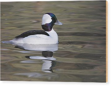 Wood Print featuring the photograph Bufflehead by Tyson and Kathy Smith