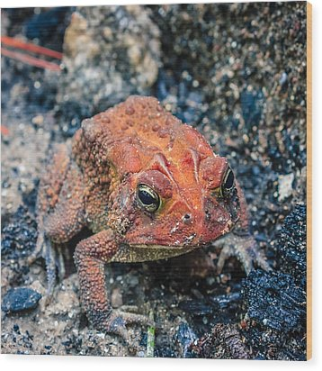 Wood Print featuring the photograph Bufo Terrestris by Rob Sellers
