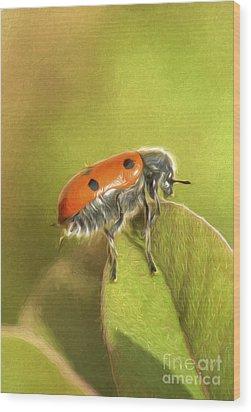 Bug On Leave Wood Print by Perry Van Munster