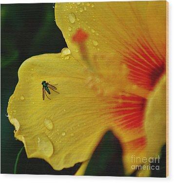 Bugged Hibiscus Wood Print