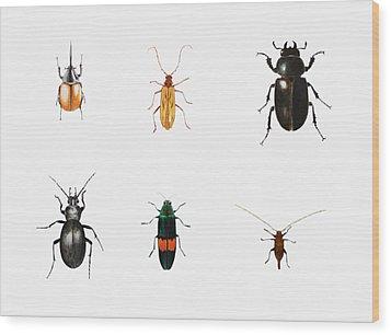 Bugs Wood Print by Ele Grafton