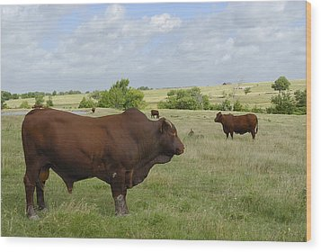 Wood Print featuring the photograph Bull And Cattle by Charles Beeler