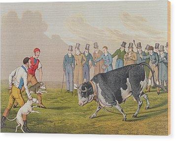 Bull Baiting Wood Print by Henry Thomas Alken