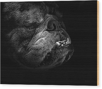 Wood Print featuring the photograph Bull Dog by Bob Orsillo