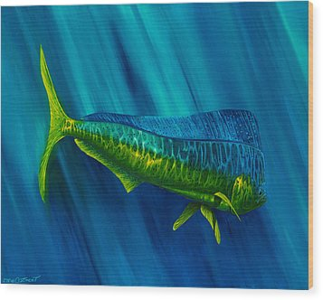 Bull Dolphin Wood Print by Steve Ozment