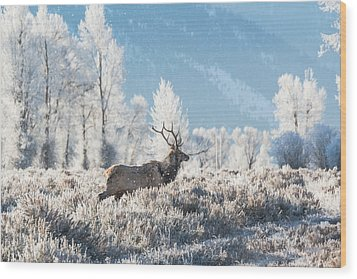 Wood Print featuring the photograph Bull Elk At Winter Dawn by Yeates Photography