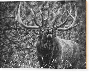 Bull Elk Bugling Black And White Wood Print by Ron White