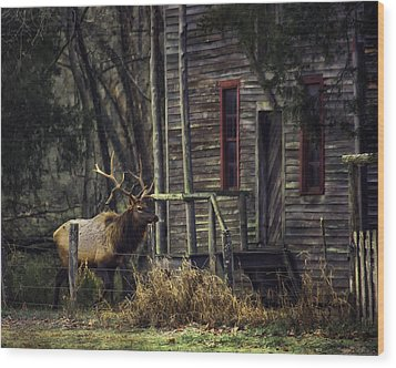 Bull Elk By The Old Boxley Mill Wood Print by Michael Dougherty