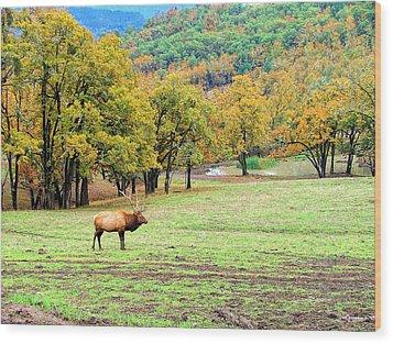 Bull Elk Wood Print by Wendy McKennon