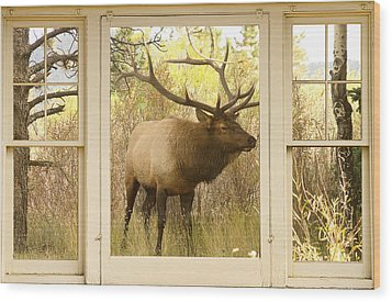 Bull Elk Window View Wood Print by James BO  Insogna