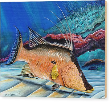 Bull Hogfish Wood Print by Steve Ozment