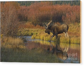 Bull Moose Wood Print by Thomas and Pat Leeson