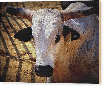 Bull Riders - Nightmare - Rodeo Bull Wood Print