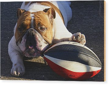 Bulldog And Ball Wood Print by DerekTXFactor Creative