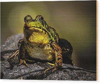 Bullfrog Watching Wood Print by Bob Orsillo