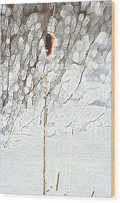Bulrush In Snow Wood Print by Carolyn Reinhart