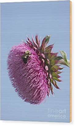 Bumble Bee And Thistle Wood Print by Tannis  Baldwin