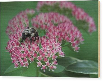 Bumble Bee Bliss Wood Print by Sue Chisholm