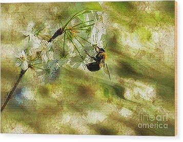 Bumble Bee Eating Sweet Nectar Wood Print by Dan Friend