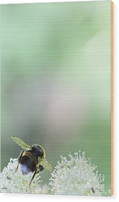 Wood Print featuring the photograph Bumble Bee by Jivko Nakev