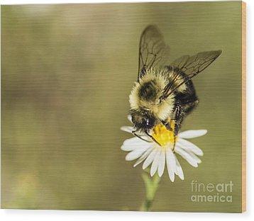 Bumble Bee Macro Wood Print by Debbie Green